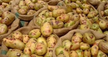 Prezidentské zemiaky